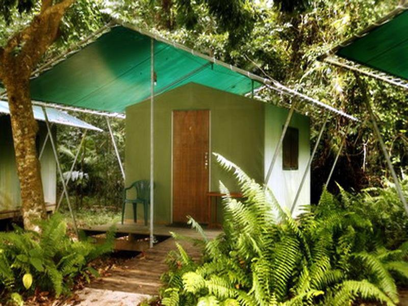 jungle lodge